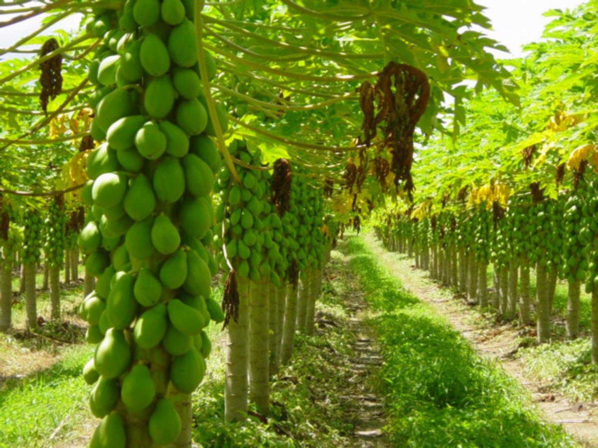 Assis em busca do crescimento na área agrícola