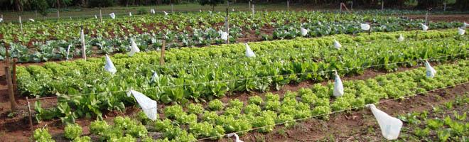 ESAPP reassume horta para fins pedagógicos e venda a população