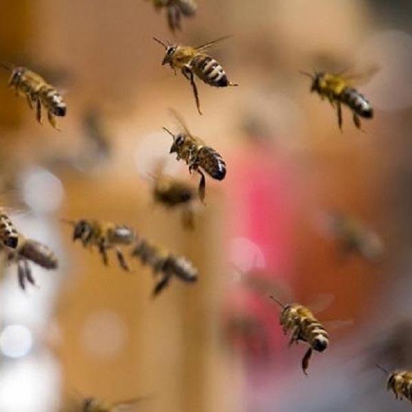 Grupo é atacado por enxame de abelhas durante churrasco em cachoeira de Ibirarema