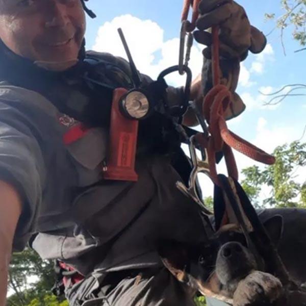 Cachorro que caiu em penhasco de 30 metros é resgatado por bombeiros em Marília