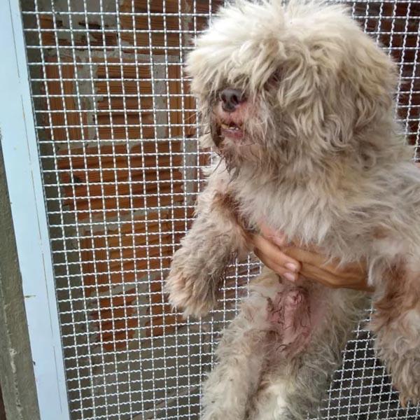 Cão é resgatado por bombeiros após cair em penhasco ao se assustar com fogos de artifício em Marília