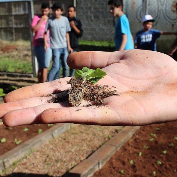 Sindicato Rural Patronal abre inscrições para Programa Jovem Agricultor do Futuro