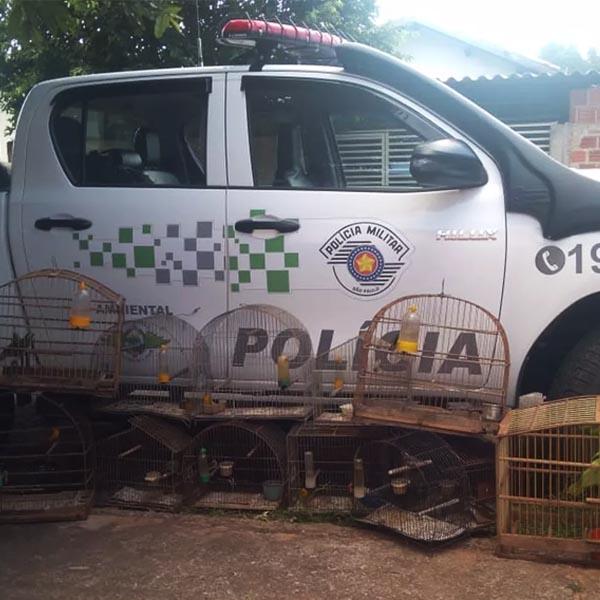 Morador de Rancharia leva multa de R$ 6,5 mil por manter aves silvestres em cativeiro
