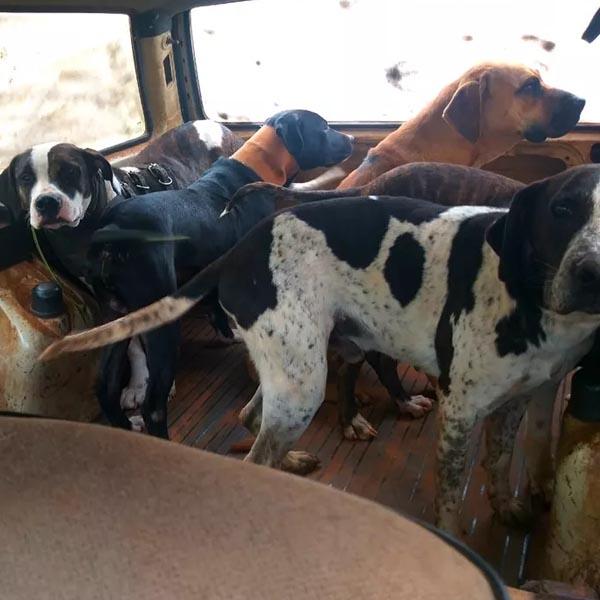 Polícia aplica multa de R$ 42 mil após constatar maus-tratos a animais usados para caça em Rancharia