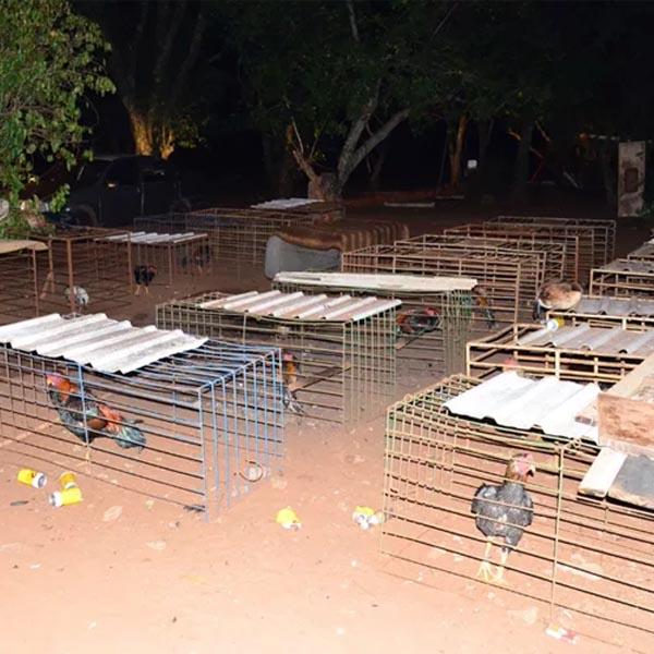 Homem é multado em mais de R$ 200 mil por promover rinhas de galos em Assis