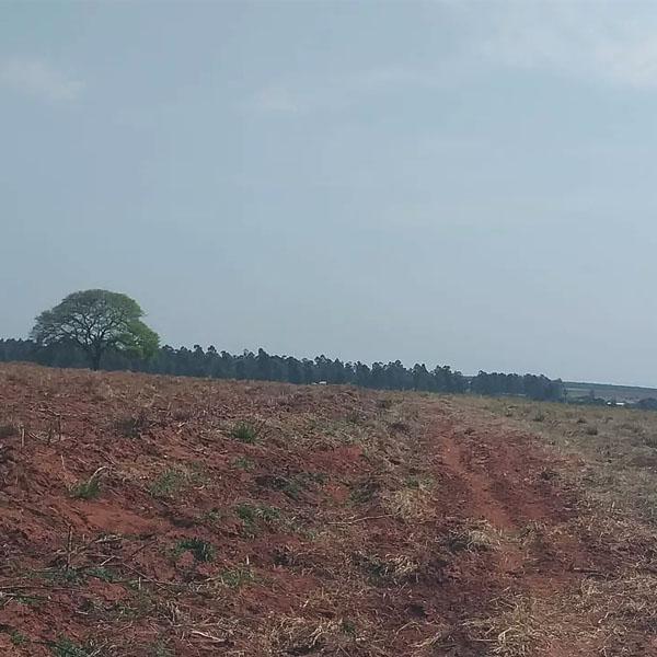 Fazendeiro leva multa de mais de R$ 33 mil por colocar fogo em vegetação, em Rancharia