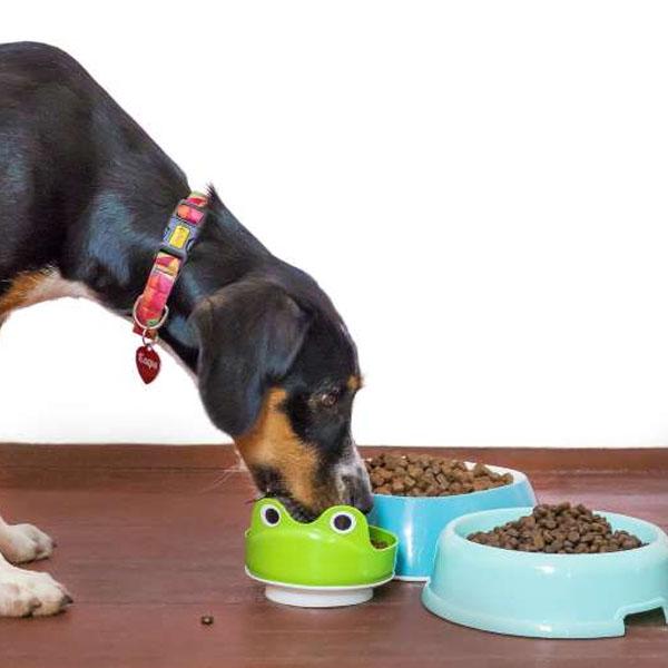 Seca, úmida ou caseira; qual é a melhor comida para o seu cão?