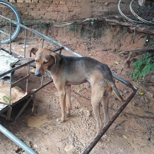 ONG flagra cachorro em situação de maus-tratos e dono é preso em Marília