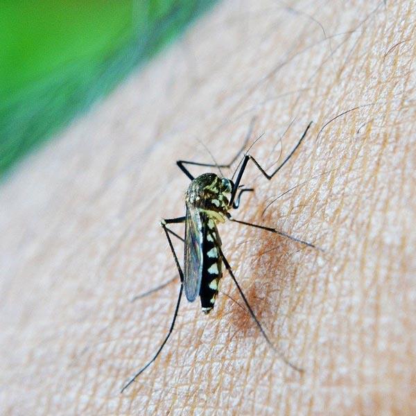 Prefeitura de Quatá faz alerta à população para o combate ao mosquito da dengue