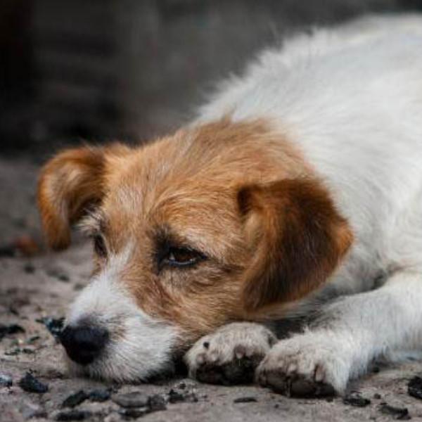 Protetores de animais promovem carreata contra os maus tratos em Paraguaçu