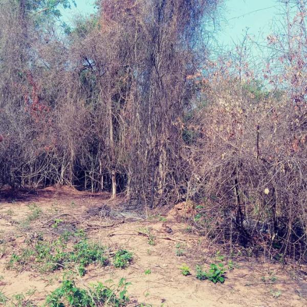 Após atear fogo em folhas no quintal, mulher leva multa de mais de R$ 140 mil em Rancharia
