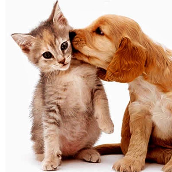 Vacinação contra raiva em cães e gatos acontece nesta quarta-feira