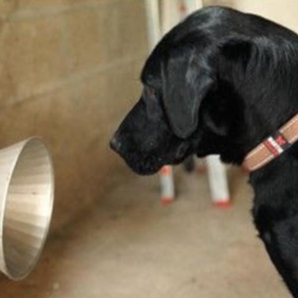 Outubro Rosa: Como cães ajudam na prevenção do Câncer de Mama