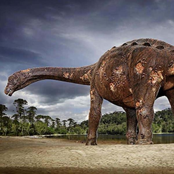 Fósseis de dinossauro encontrados em obra em Marília podem ter 65 milhões de anos